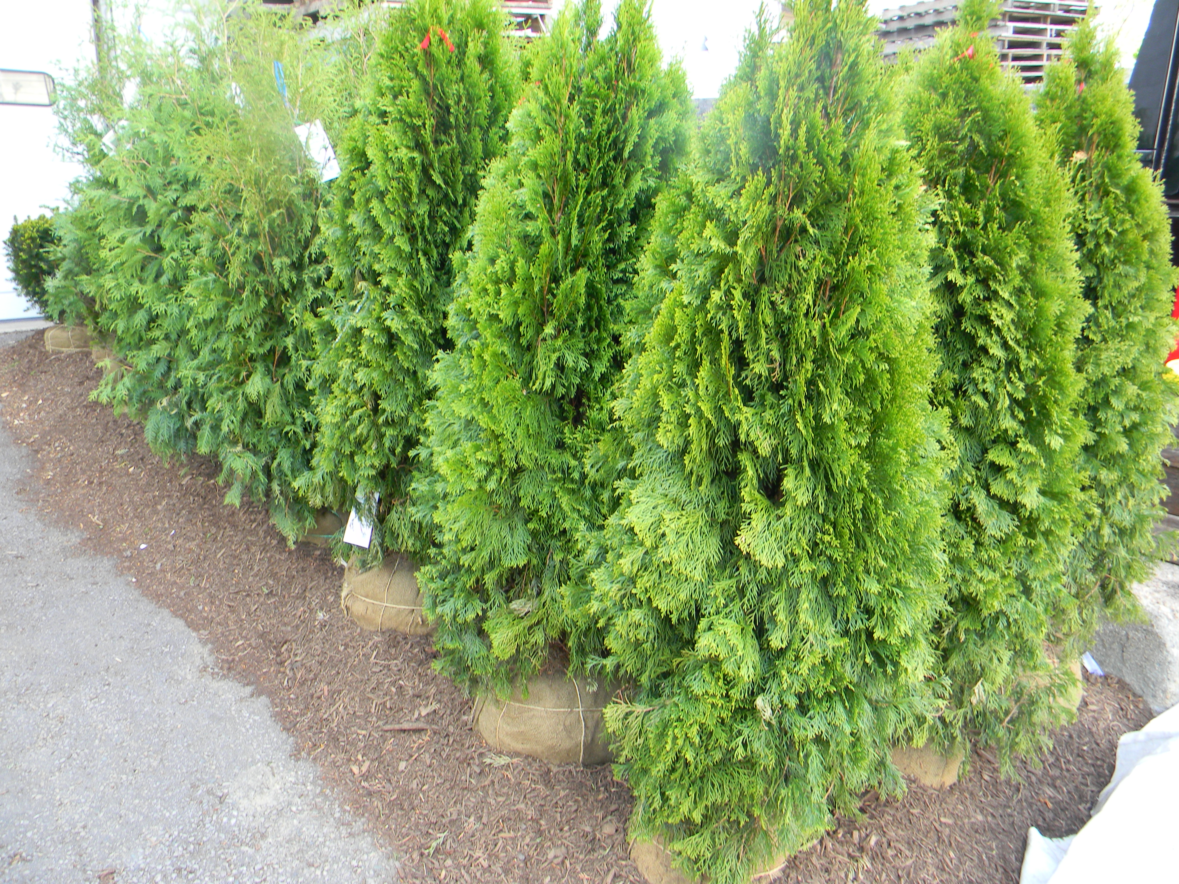 Annuals Vegetables Perennials Ornamental Shrubs Evergreens